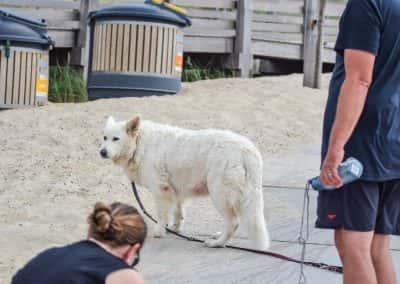 Honden strand vrouwenpolder